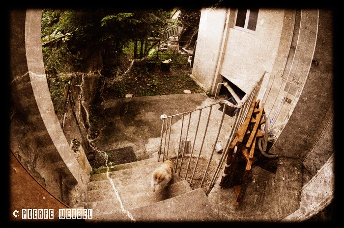 Arno\'s garden