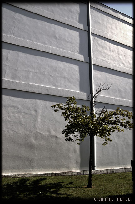 L\'arbre qui cache le mur
